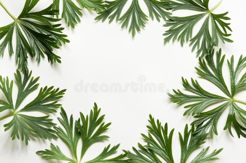 Green leaves on white background. Top view with copy space. Isolated. Floral pattern. stock photos
