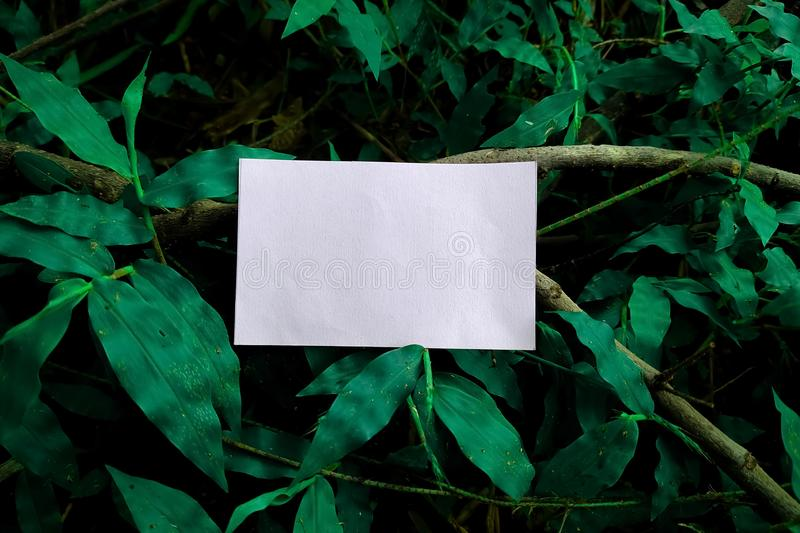 Green leaves with white paper card note. Flat lay. Nature concept stock photos