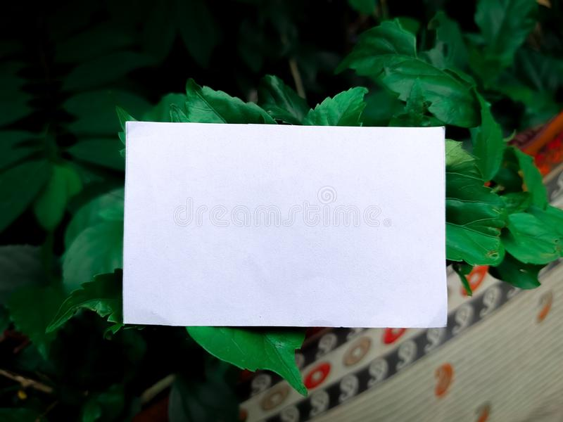 Green leaves with white paper card note. Flat lay. Nature concept stock image