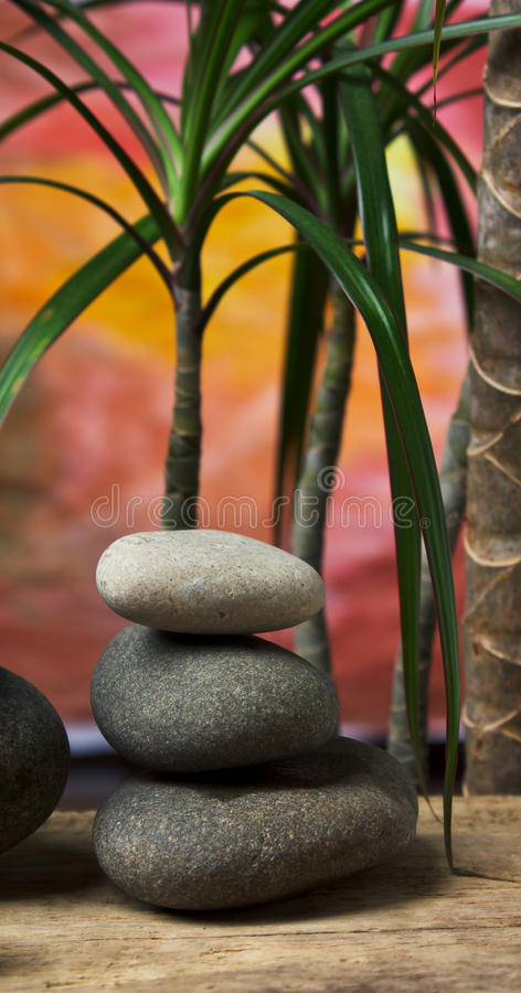 Green leaves and zen stones. On a colored background royalty free stock photos