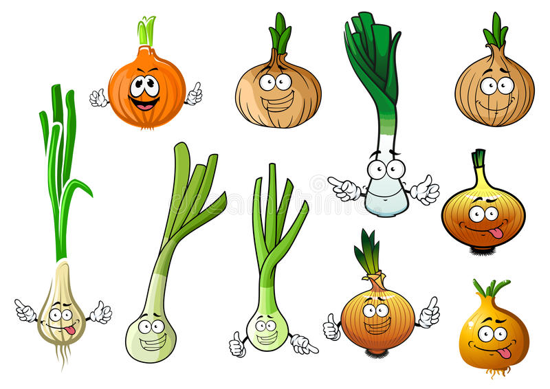 Green, leek and bulb onion vegetables. Cartoon green onions, fresh juicy leek and dried yellow bulb of common onions vegetables. Addition to recipe book vector illustration