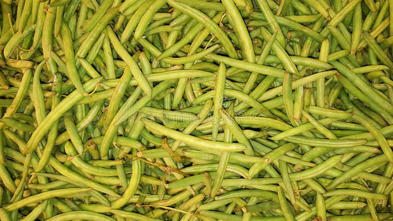 Green french bean background. Green legume french bean background royalty free stock photo