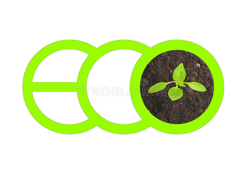 Green letters spelling ECO and top view of small sprout growing from the ground isolated on white background vector illustration