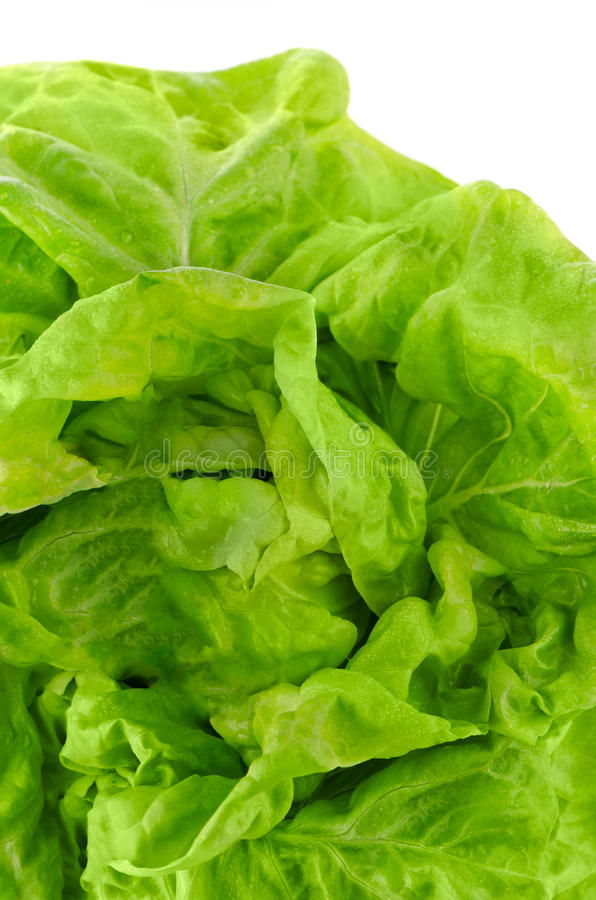 Download Green lettuce stock photo. Image of ingredient, background - 25178594