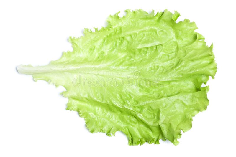 Download Green Lettuce stock photo. Image of floral, dish, leaves - 25860024