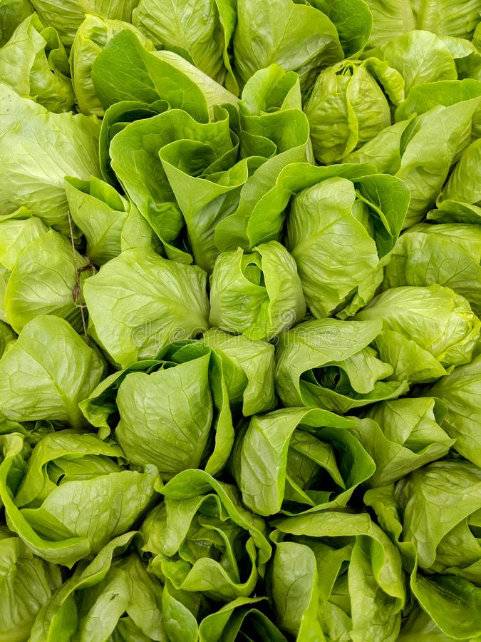 Green Lettuce Heads. For Sale at Farmers Market on the Big Island, Hawaii close closeup plant vegetable fresh salad variety detail gardening leaves loose-leaf stock images