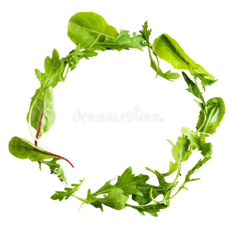 Green lettuce salad leafs isolated on white background. Fresh Green lettuce salad leafs isolated on white background stock image
