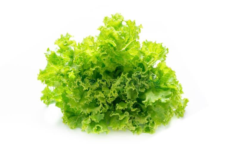 Green lettuce on white background royalty free stock image