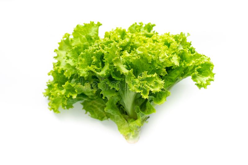Green lettuce on white background stock images