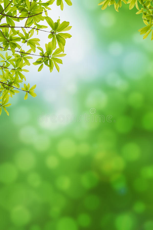 Green leves on green background stock photo