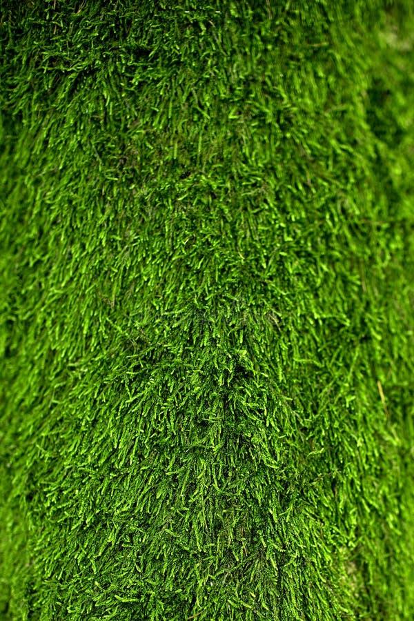 Green lichen background. Natura gras stock images