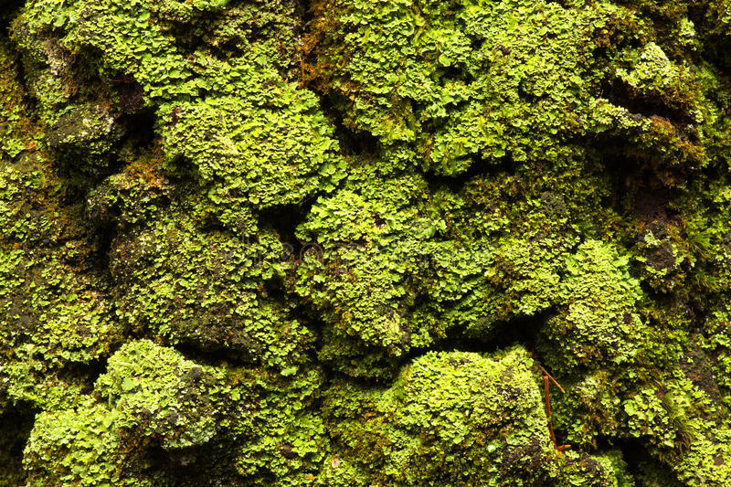 Download Green lichen stock image. Image of strange, small, macro - 83702491