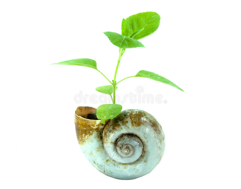 Green life concept. With nautilus shell stock image