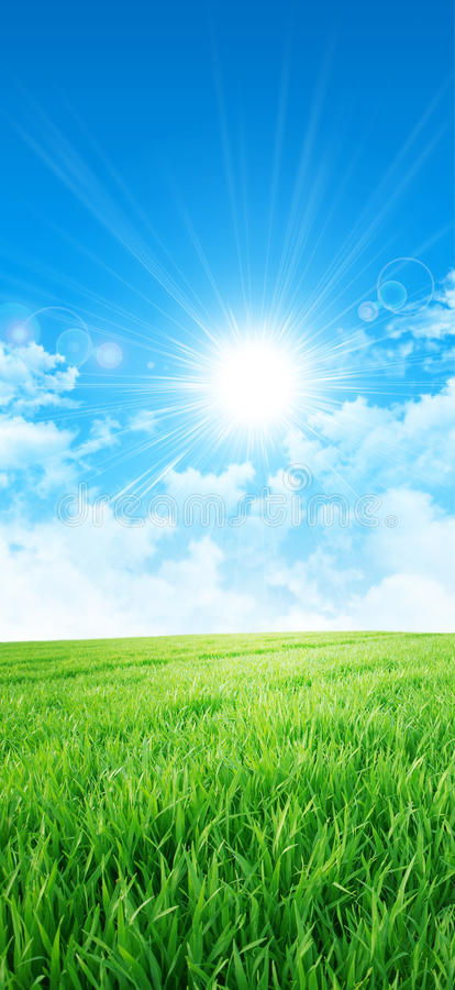 Green like a meadow in the sun. Fresh field of green grass growing slowly under the rising sun stock photos