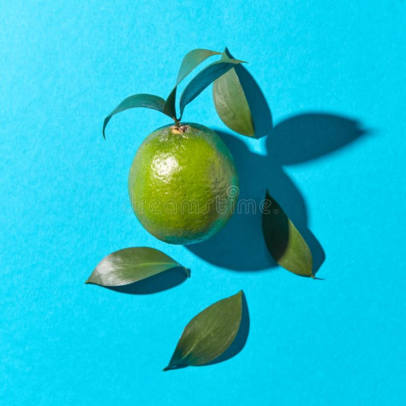 Green lime with leaves on a blue background with reflection of the shadows and copy space. Healthy fruit. Top view stock image
