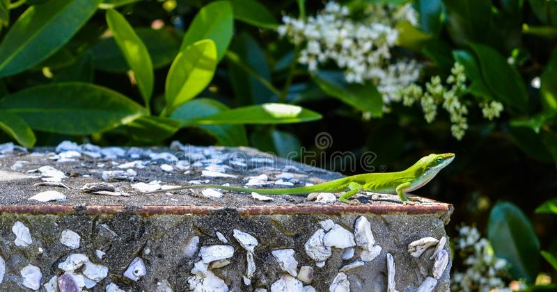 Green Lizard on Top of Gray Surface stock photo