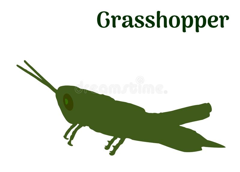 Green Locust profile on white, vector eps 10. Locust wild green animal isolated on white background. Simple outline drawn grasshopper insect logo icon vector vector illustration