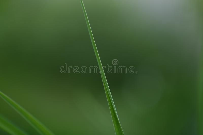 Green long leaves with green background. Summer time stock images