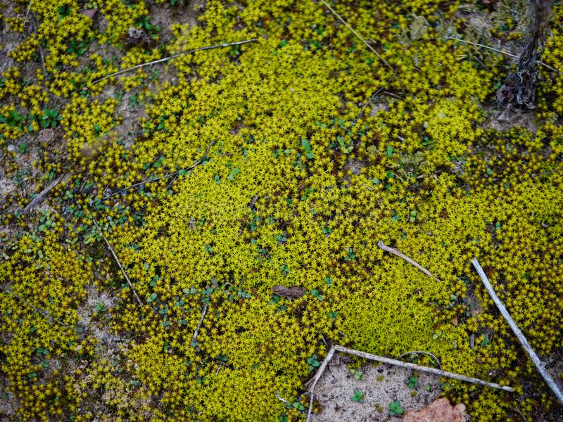 Green low moss on the sand in the fall royalty free stock images