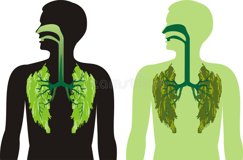 Green lung lobes - breathe deeply stock illustration