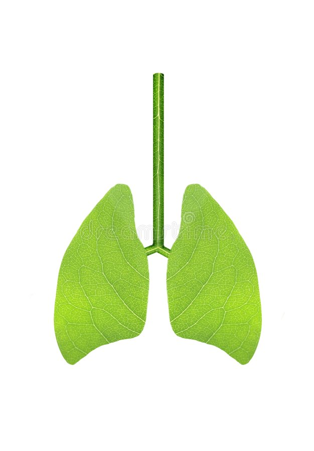 Free Green Lungs Royalty Free Stock Photos - 9217168