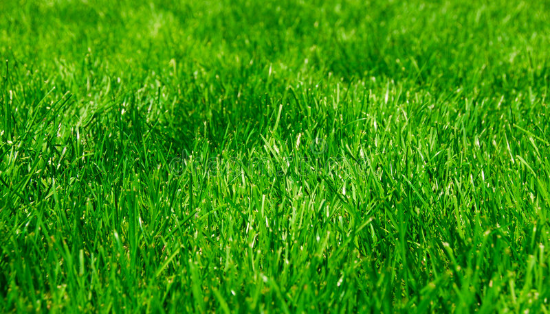 Green Lush Grass royalty free stock photography