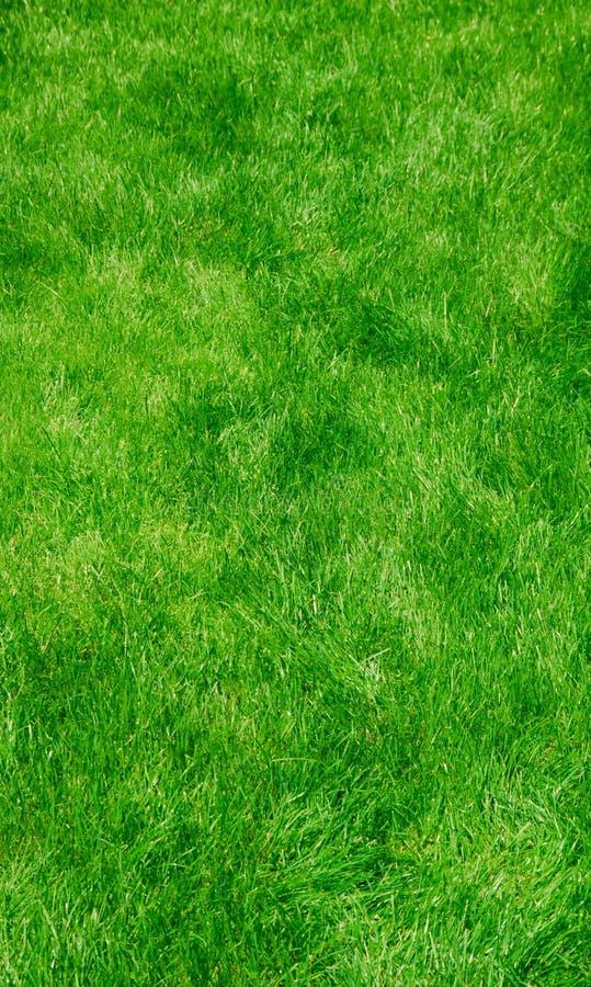 green lush grass