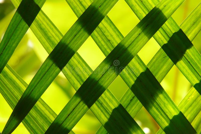 Green, Macro Photography, Close Up, Leaf stock image
