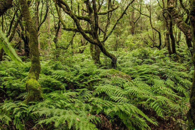 Green Madeira. Tropical forest in the mountains on Madeira island royalty free stock image