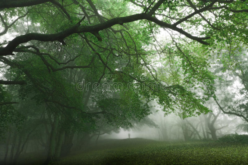 Green Magical Forest Stock Photo