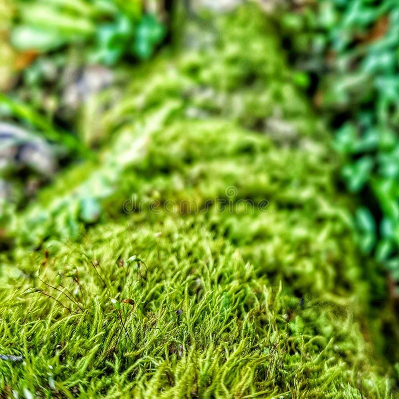 Green majesty royalty free stock photography