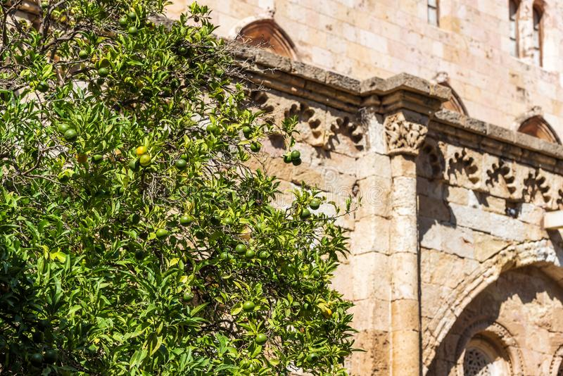 Green mandarins on a tree in the courtyard of the Tarragona Cathedral Catholic cathedral on a sunny day, Catalunya, Spain. Close. Up stock images