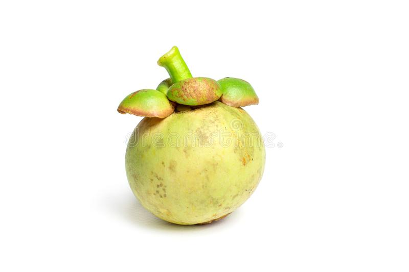 Green mangosteen isolated on white background royalty free stock photography