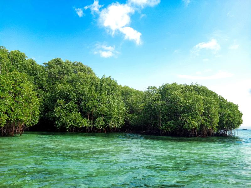 Green Mangrove Forrest by the Sea in Nusa Lembongan island, Bali. Nusa Lembongan Bali, Indonesia - June 27, 2017: Green mangrove forrest by the sea royalty free stock image
