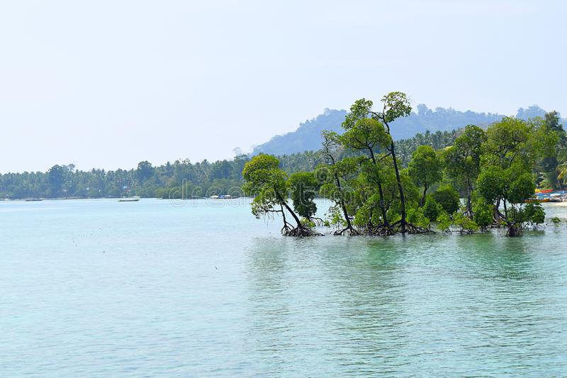 Green Mangrove Trees in Azure Sea Water and Clear Sky - Natural Background - Havelock Island, Andaman Nicobar, India royalty free stock photos