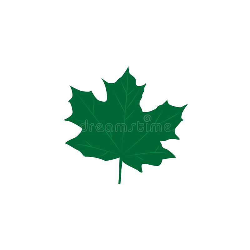 Green maple leaves isolated on white background. Flat style. Vector illustration. Green maple leaves isolated on white background. Flat style stock illustration
