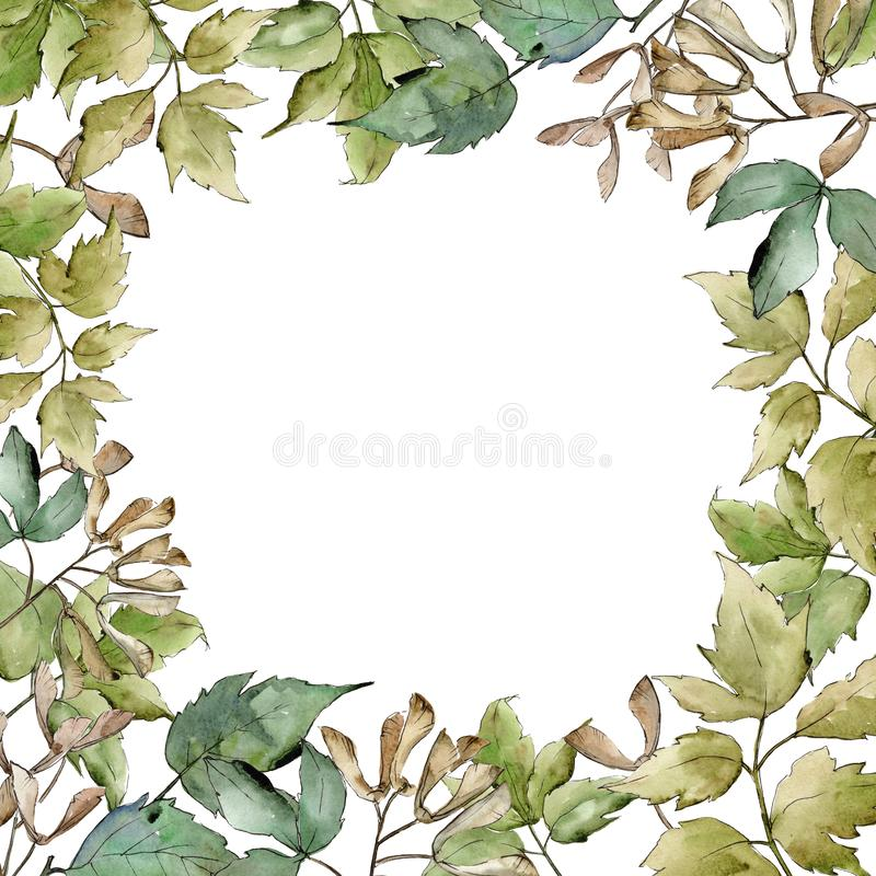 Green maple leaves. Leaf plant botanical garden floral foliage. Frame border ornament square. vector illustration