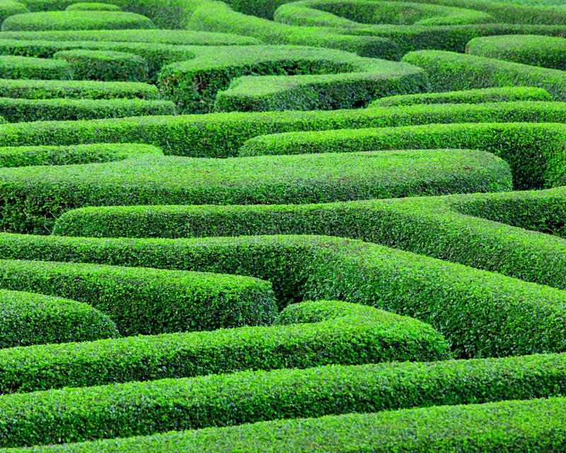 Green maze stock images
