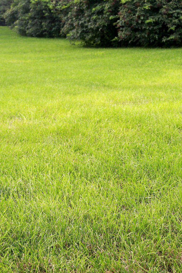 Green Meadow Royalty Free Stock Photography