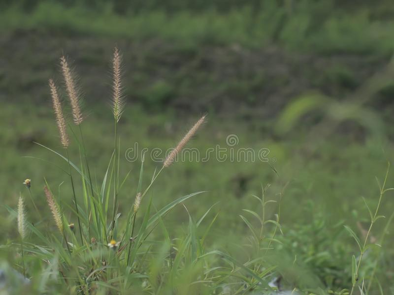 Green meadow on the background of mountains royalty free stock photos