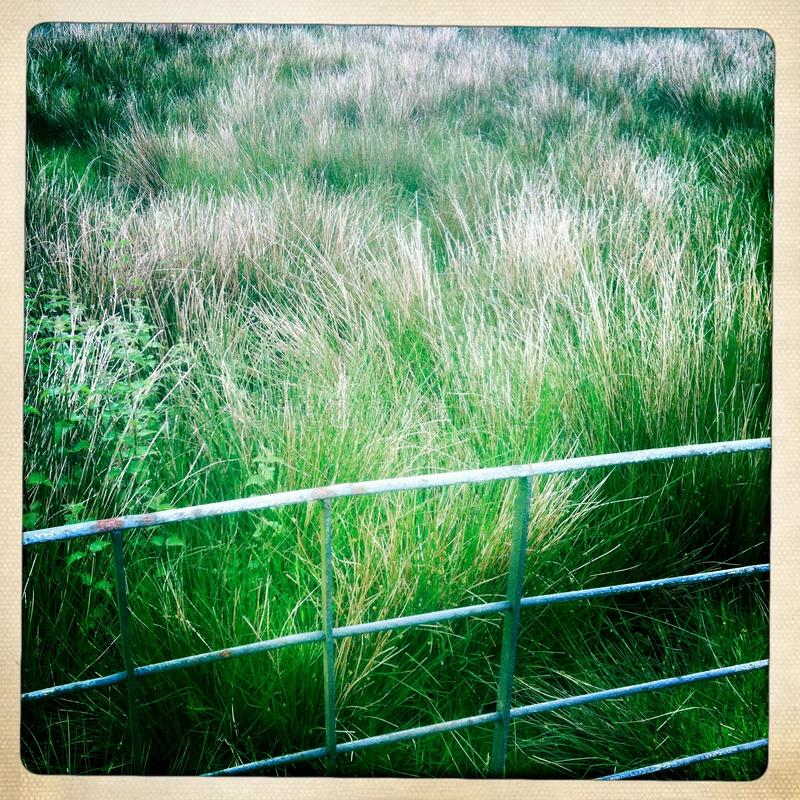 Download Green meadow behind fence stock image. Image of britain - 28295483