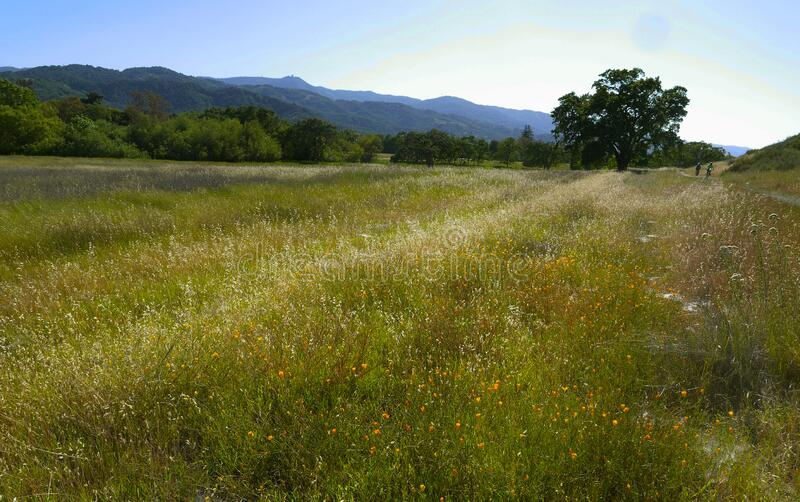 Green meadow with  flowers blooming royalty free stock images