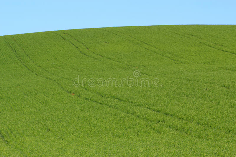 Green meadow and blue sky stock photo