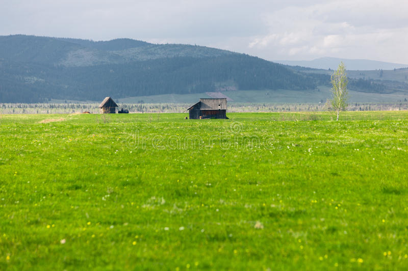 Green meadow and chalets. Plain in the foothills with a two small chalets. Green meadow and birch in Transylvania, Romania royalty free stock image