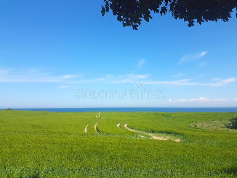 Green meadow field with tractor track. At coastline royalty free stock photo