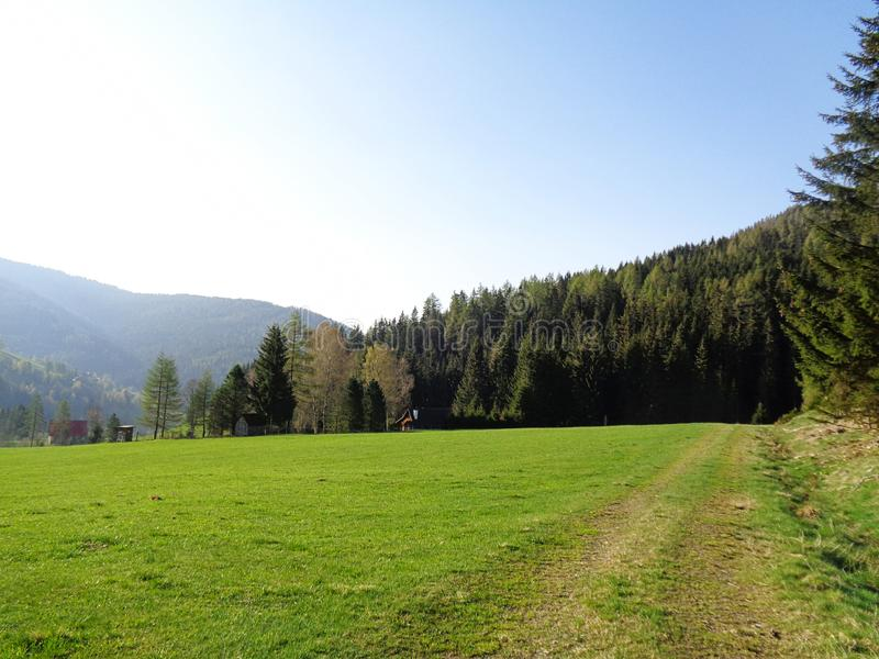 a green meadow and forest in the alps in Austria royalty free stock photos