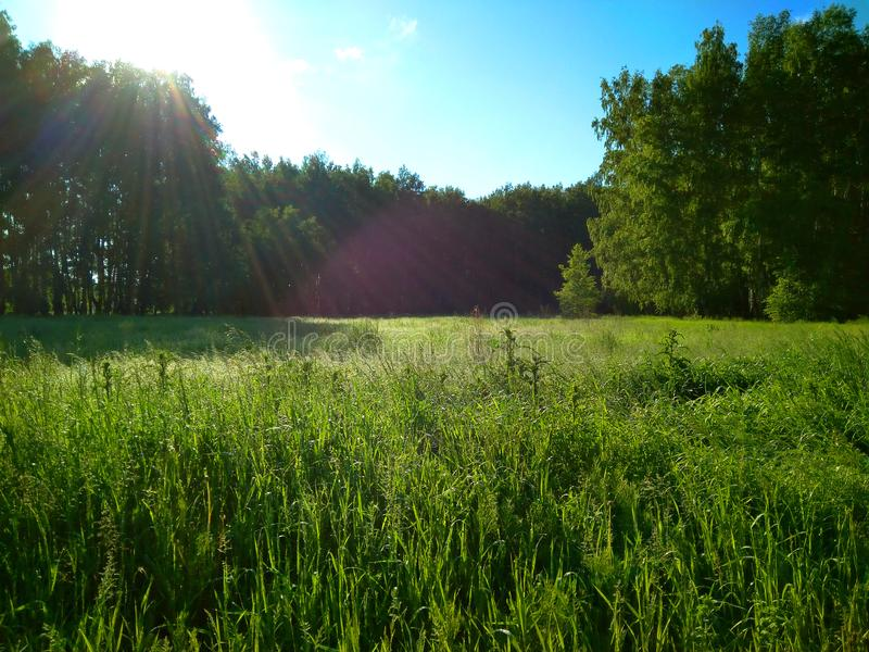 Green meadow forest meadow summer sun succulent green emerald grass heat scenic view of the dense vegetation clear of fresh air an. D country life nature trees stock photography