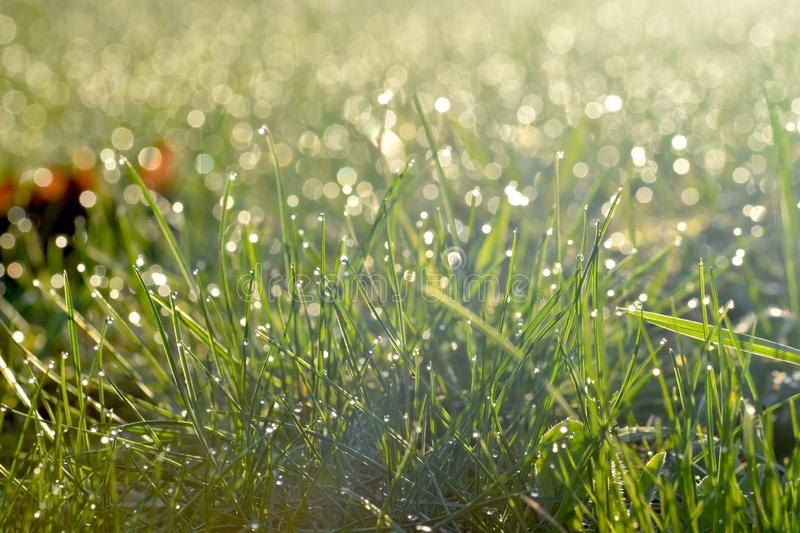 Green meadow with morning dew and sunlight from a rising sun. royalty free stock photo