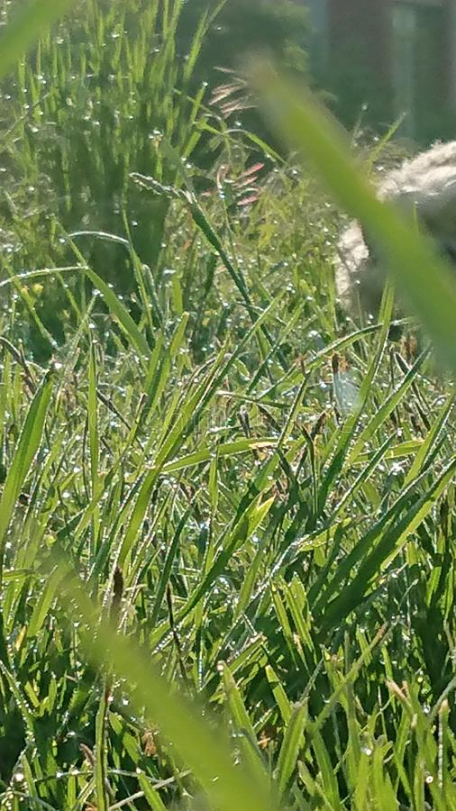 Green meadow in the morning sun with water drops stock image