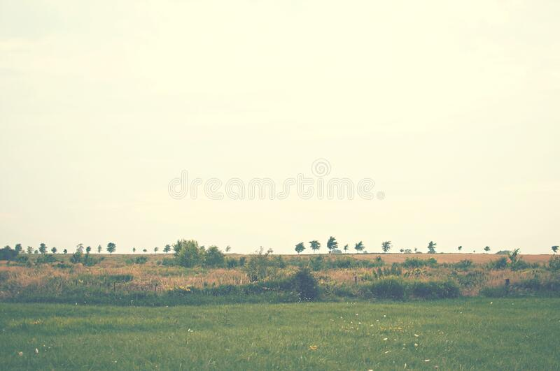 Green meadow on sunny day royalty free stock image